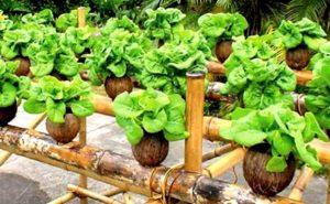 hidroponik, agribisnis, sayuran organik