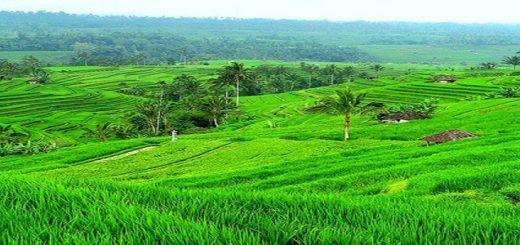 pertanian, pertanian organik, pertanian hidroponik, pertanian modern, pertanian indonesia, tanaman perkebunan, tanaman buah