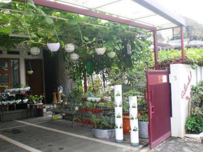 Hasil gambar untuk Menanam Sayuran dan Buah-Buahan di Halaman Rumah