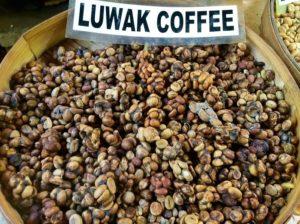 Gambar Kopi Luwak, kopi luwak, kopi luwak coffee, kopi luwak cafe, kopi luwak price