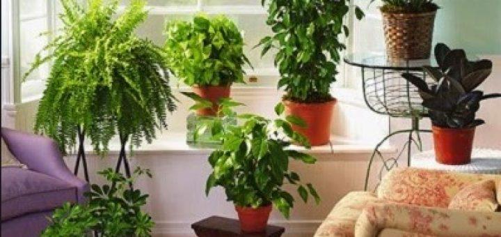 tanaman hias di dalam ruangan