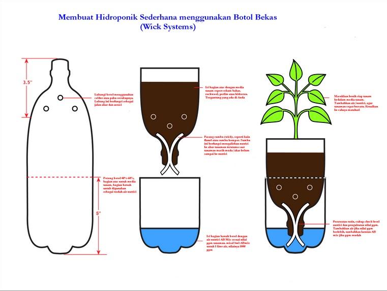 Hidroponik Menggunakan Botol Bekas