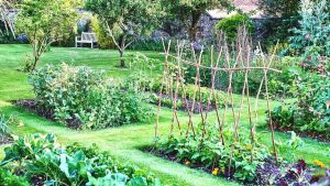 Kebun sayur