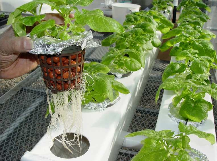 Jenis Tanaman Sayur Hidroponik Mudah Di Tanam Harga
