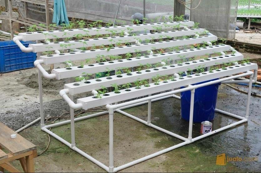 Penanaman Sayuran Hidroponik NFT