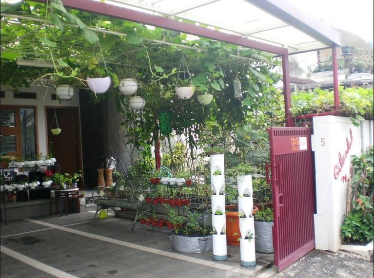 Sayuran Di Halaman Rumah