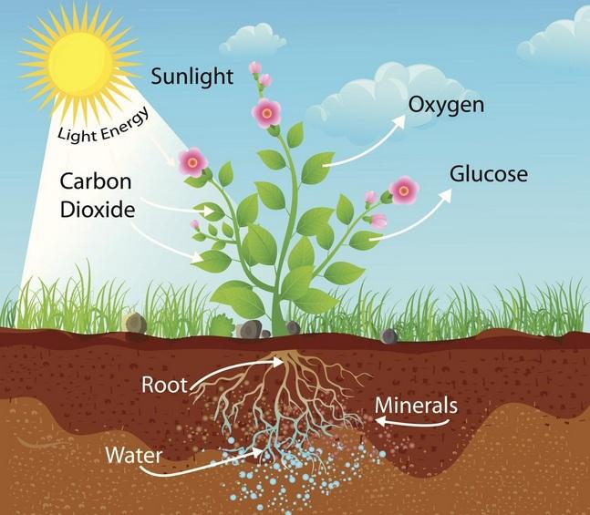 Proses Penyerapan CO2 Pada Tanaman