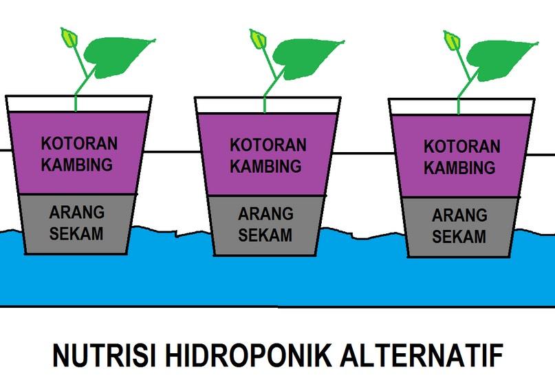 Pengganti Nutrisi Hidroponik