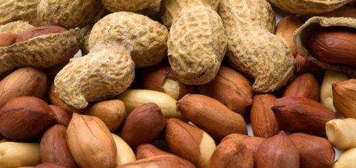 Biji Dan Polong Kacang Tanah
