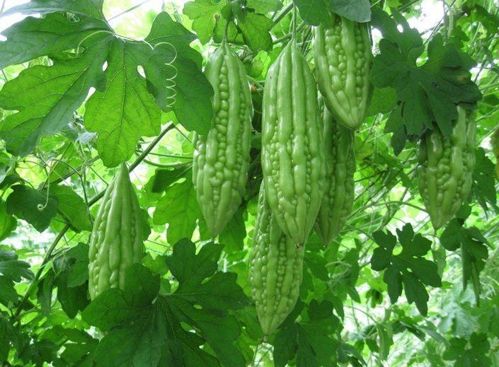 Sayur Paria