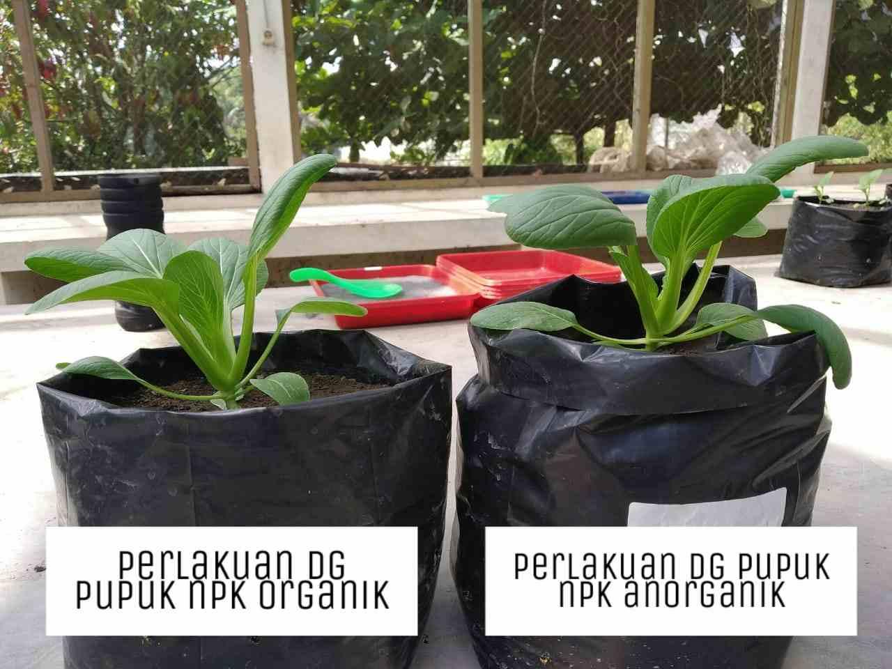 Pupuk NPK Organik Untuk Tanaman Sawi